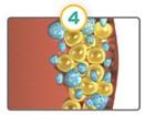 CoolSculpting dying fat cells diagram.